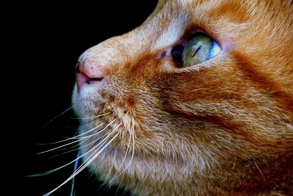 cat-321727_1280