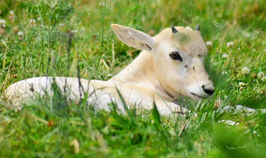 deer-1169516_1280