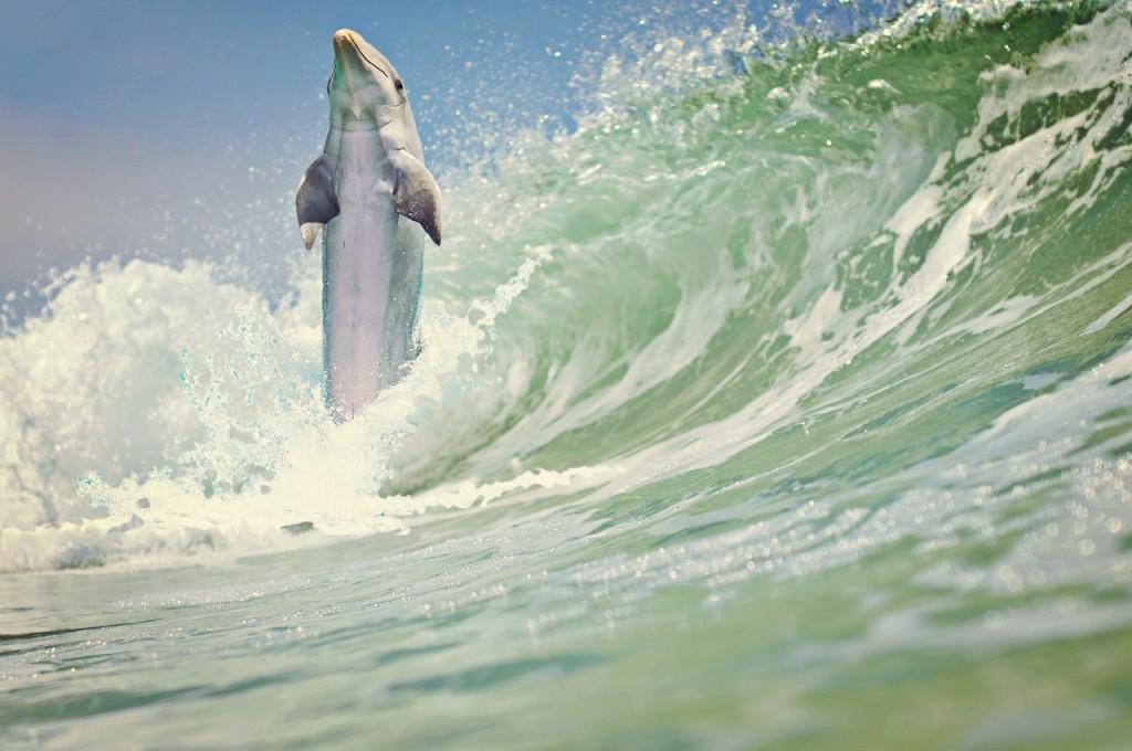 dolphin-1200924_1280