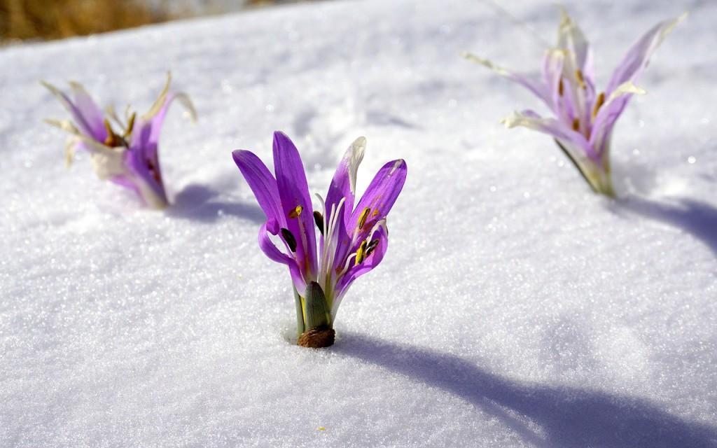 winter-flowers-1200013_1280