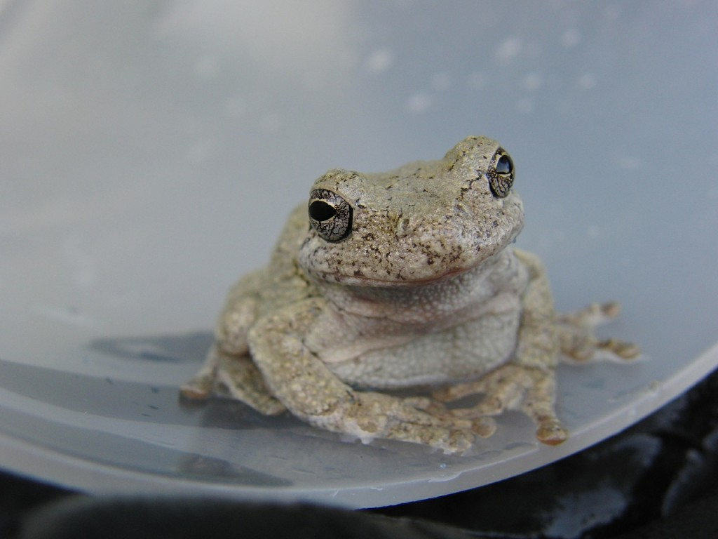 toad-535752_1280