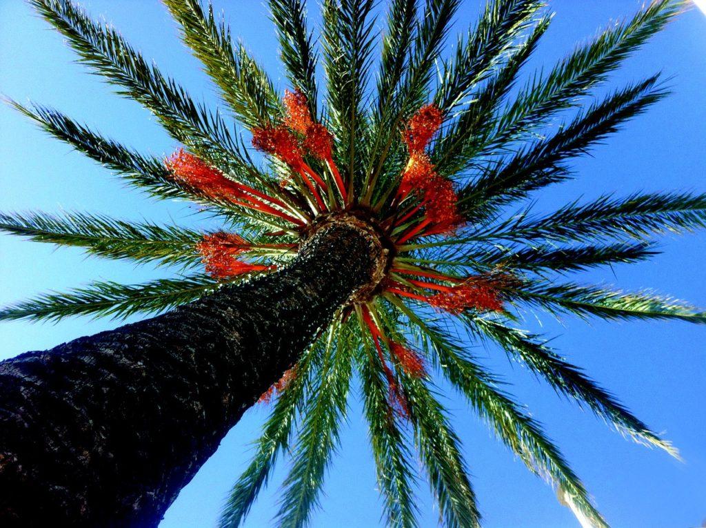 palm-tree-1324927_1280