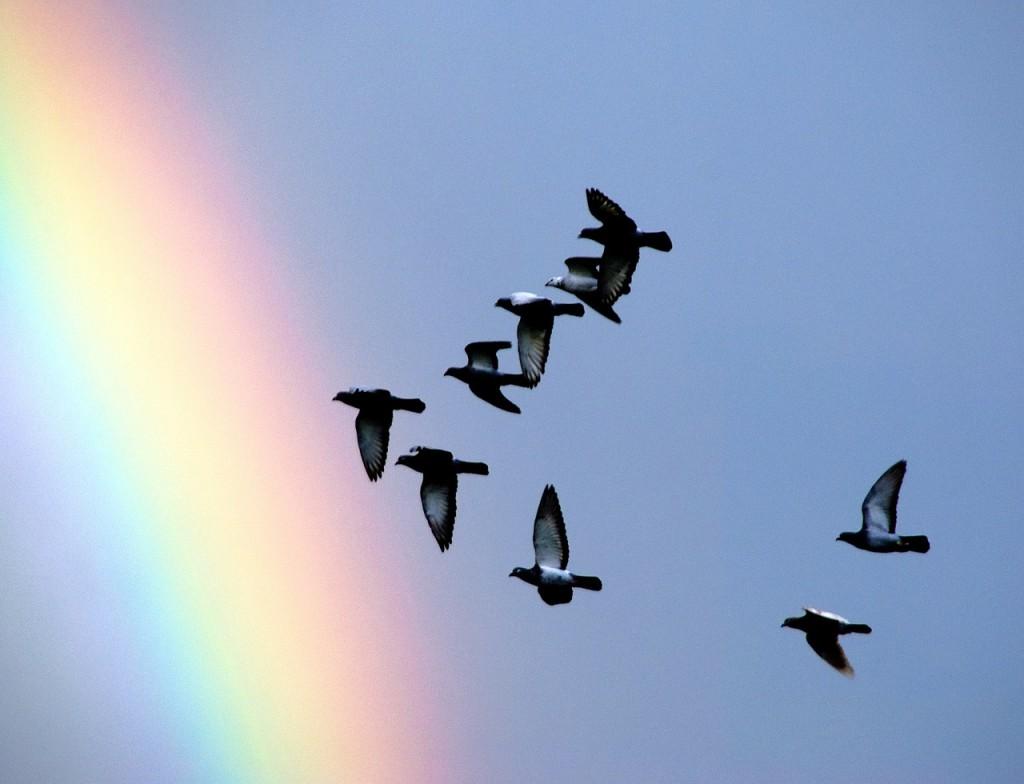 pigeons-1333865_1280