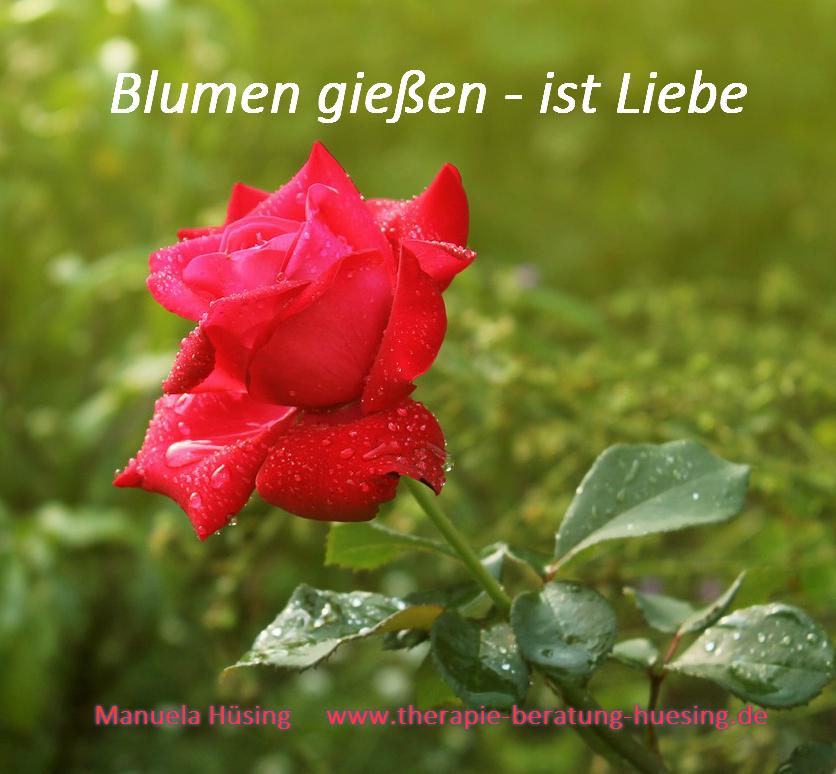 rose-1356721_1280Liebe