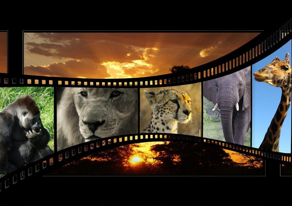 movie-596154_1280