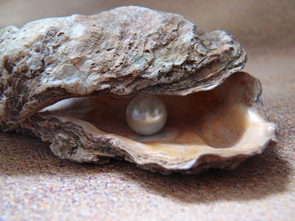 oyster-1327311_1280